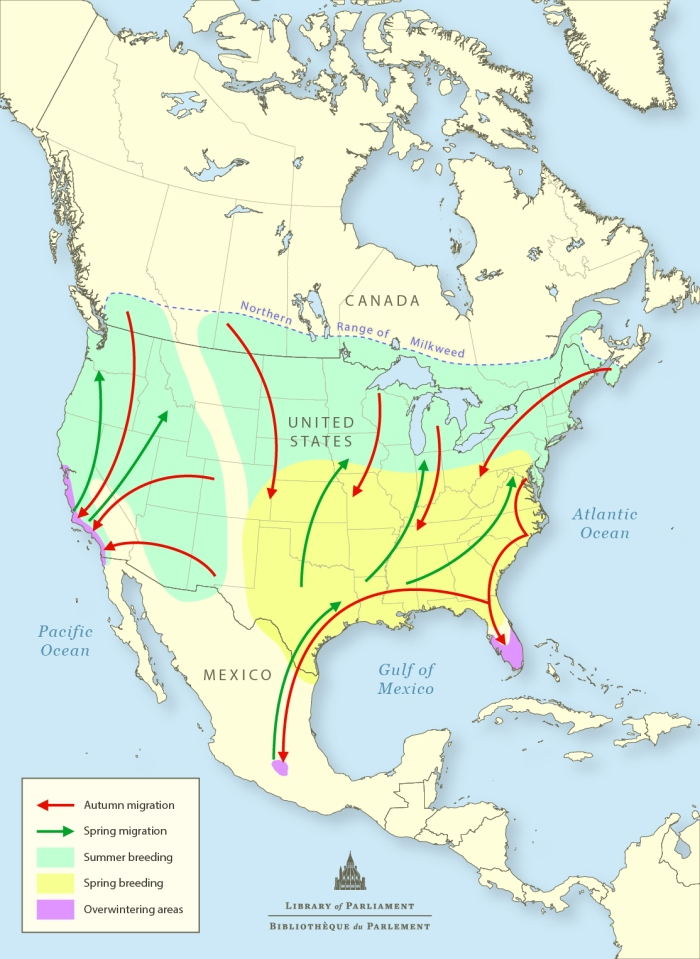 Map of Monarch Butterfly Migration Pattern in North America